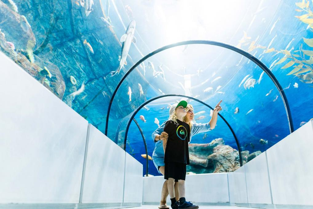 A mother and her son observe the fish in the Grand Ocean tunnel at the Aquarium du Québec.