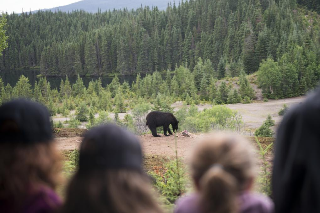 A group of people observe a black bear in the forest, in the Réserve faunique des Laurentides, in summer.