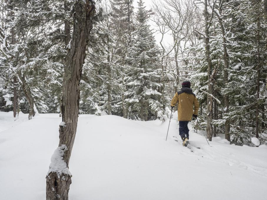 An outdoor enthusiast goes alpine hiking in a snowy forest in the Massif de Charlevoix.