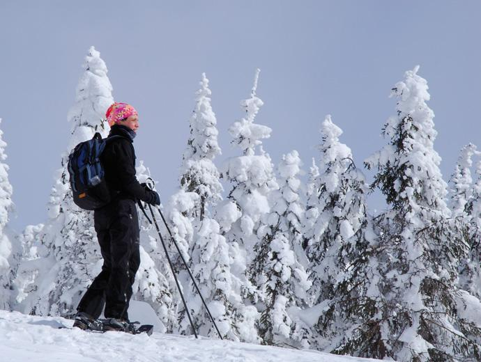 A woman is hiking in a snowy forest in the Réserve faunique des Laurentides in winter.
