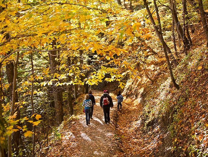 Walk in the forest in autumn in the Cap-Tourmente National Wildlife Area.