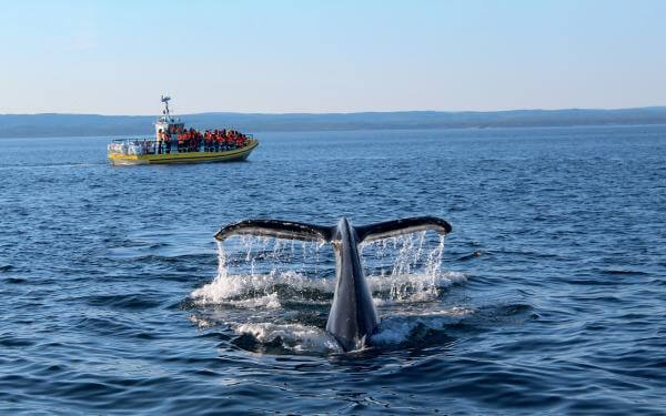 Whale watching on a zodiac