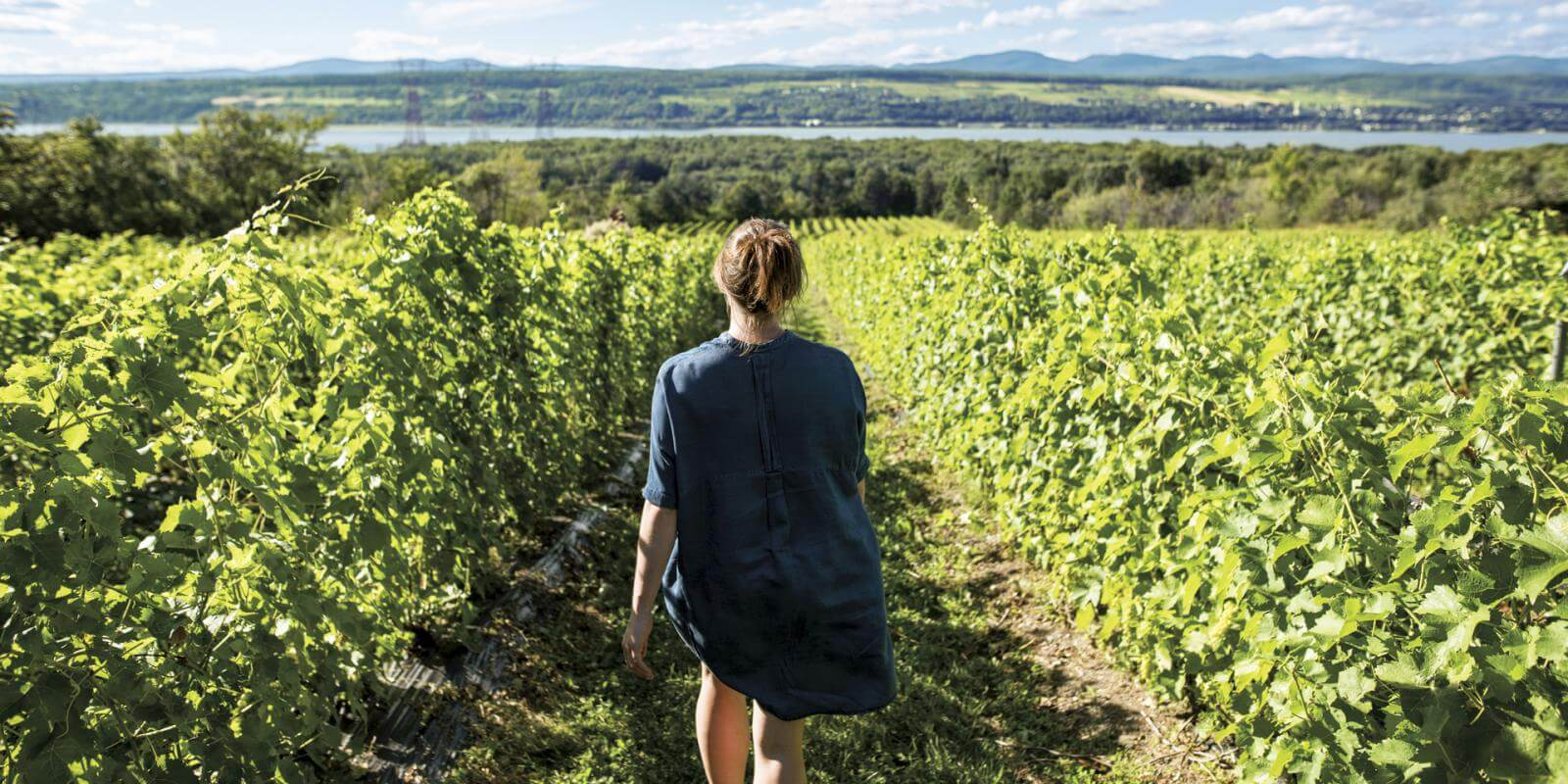 A woman walks through the Isle de Bacchus vineyard on Île d'Orléans.
