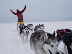 Aventure Inukshuk - Dog sledding
