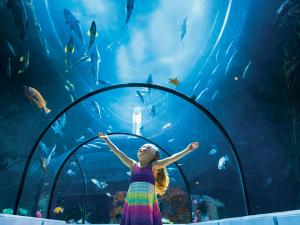 A little girl observes the fish in the Grand Ocean tunnel at the Aquarium du Québec.