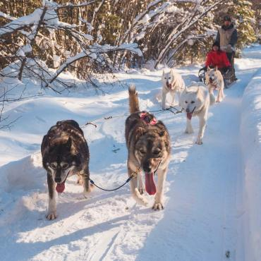 Two people are dog sledding on a snowy trail.